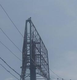 Man Climbs billboard
